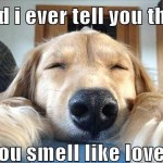 love smell